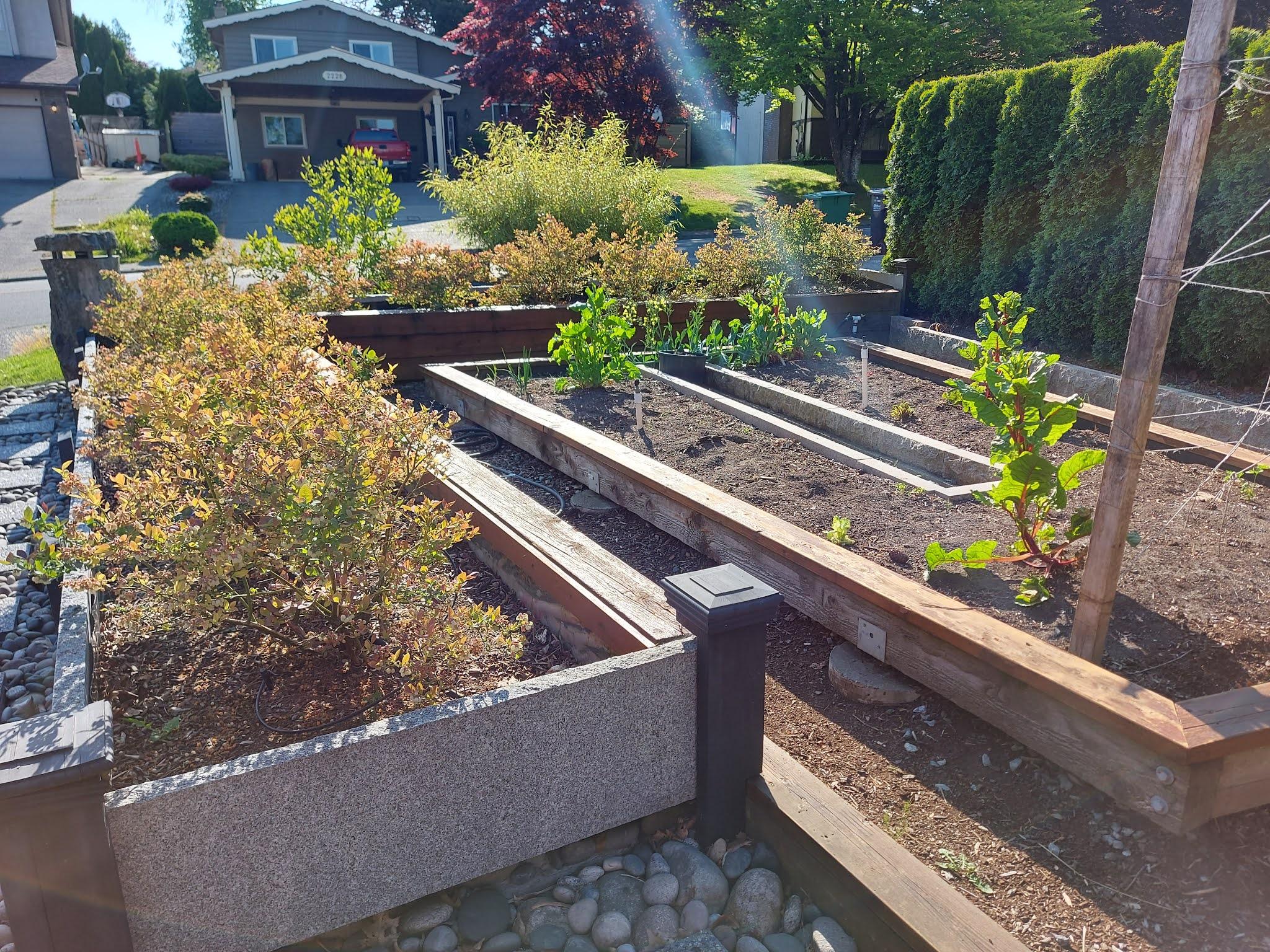 Raised bed blueberry plants ideas