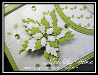 Een close-up van de groen-witte poinsettia. A close-up of the green-and-white poinsettia.