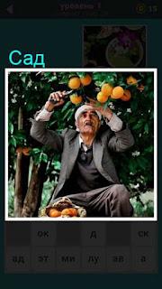 в саду садовник мужчина собирает фрукты на дереве