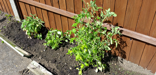 Plants planted outside