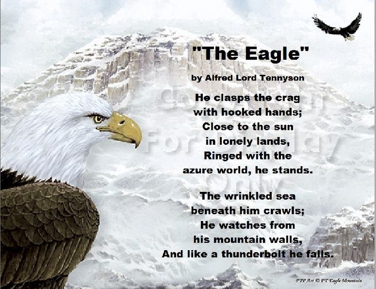 the eagle poem An introduction to a short gem of a poem by alfred, lord tennyson (1809-1892) 'the eagle' is one of tennyson's shortest poems - probably the shortest of his famous poems.