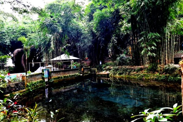 sumber-hutan-bambu-lumajang