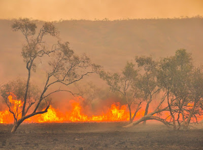 Trees silhouetted by a fast approaching brush fire in Australia