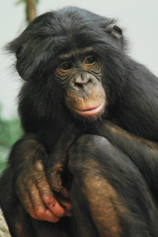 ambiente de leitura carlos romero ensaio milton marques teoria evolucao richard dawkins primatas bonobos aborto embriao darwin evolucionista