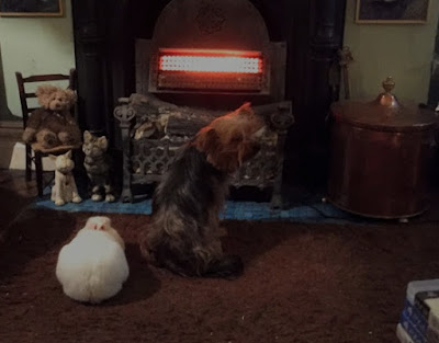 Louis The House Rabbit With Cassie The Yorkshire Terrrier