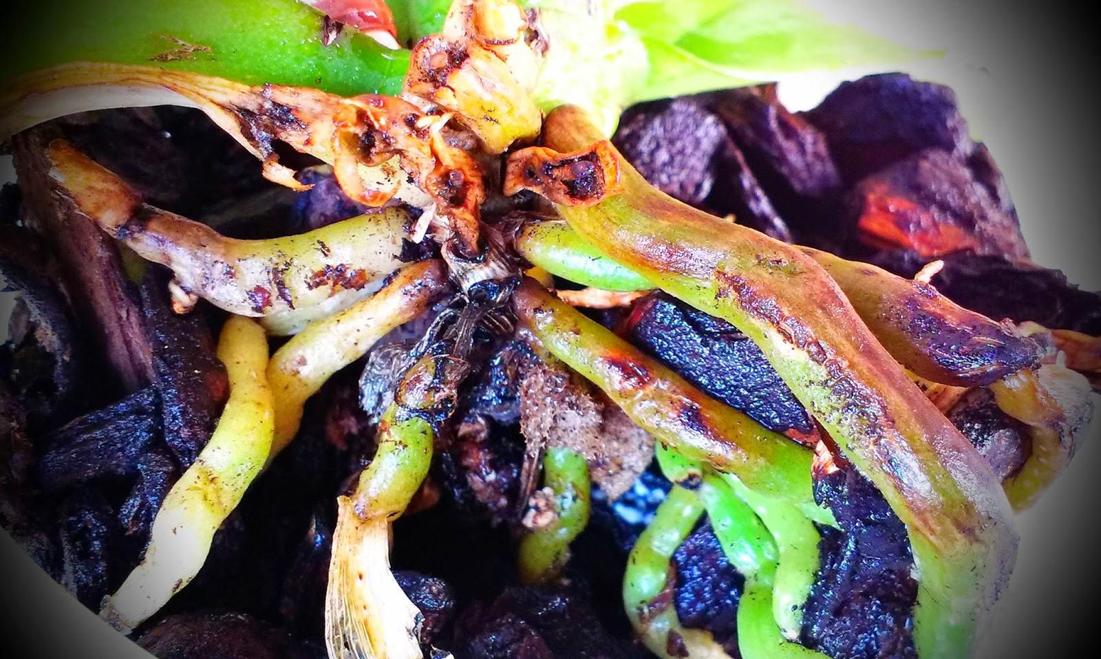 Lezzetli yemek tarifleri: domuz eti ile salata