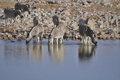Etosha National Park, Namíbia