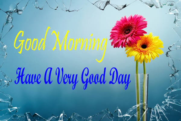 Good Morning Wishes with Daisy Flowers