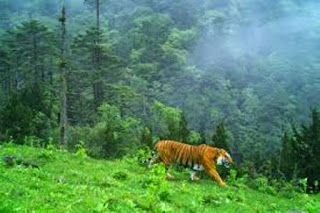 India to Co-Chair IUCN Supported APAP