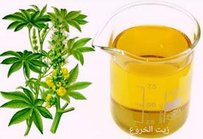 فوائد زيت الخروع وزيت الزيتون