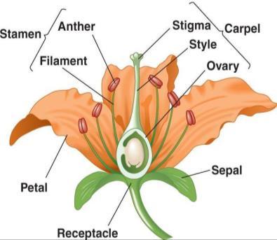 Gambar  . Struktur bunga