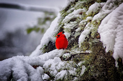 Photo of cardinal bird by Robert Thiemann on Unsplash