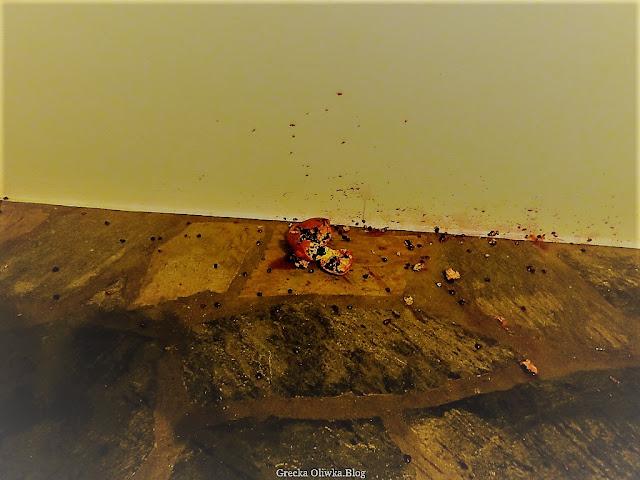 na balkonie na marmurowej podłodze leży roztrzaskany czerwony owoc granatu
