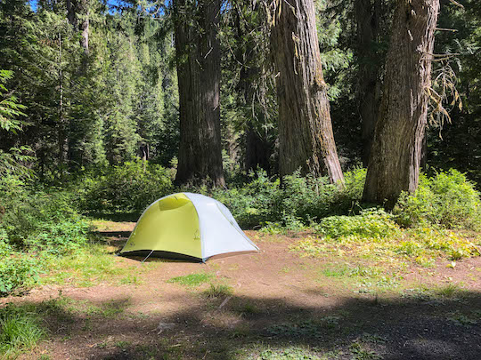Camping among western red cedars in Idaho