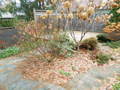 Oakwood Vaughan Toronto Backyard Fall Cleanup Before by Paul Jung Gardening Services--a Toronto Gardening Company