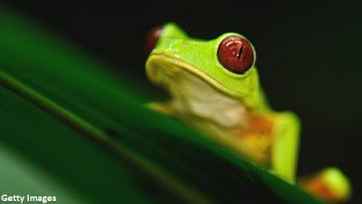 animais em extinção, plantas em extinção, Extinção, animais, flora, flora em extinção natureza, meio ambiente, sexta extinção, animals