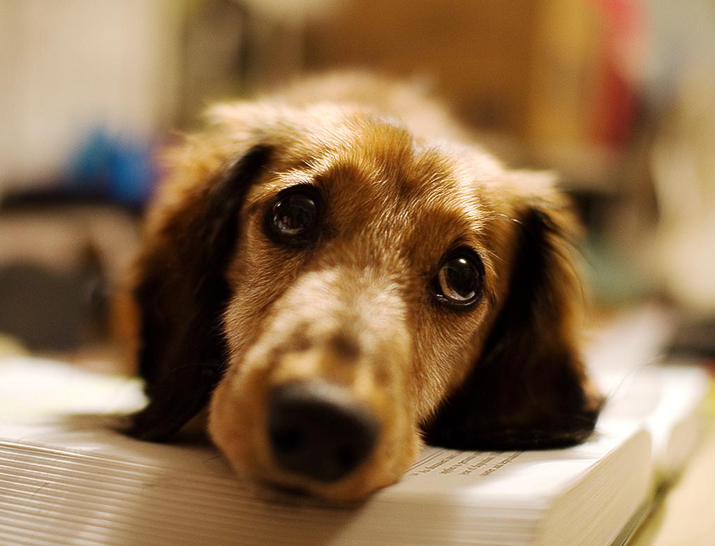 pet shops  Doenças do Cães Sintomas e Tratamento