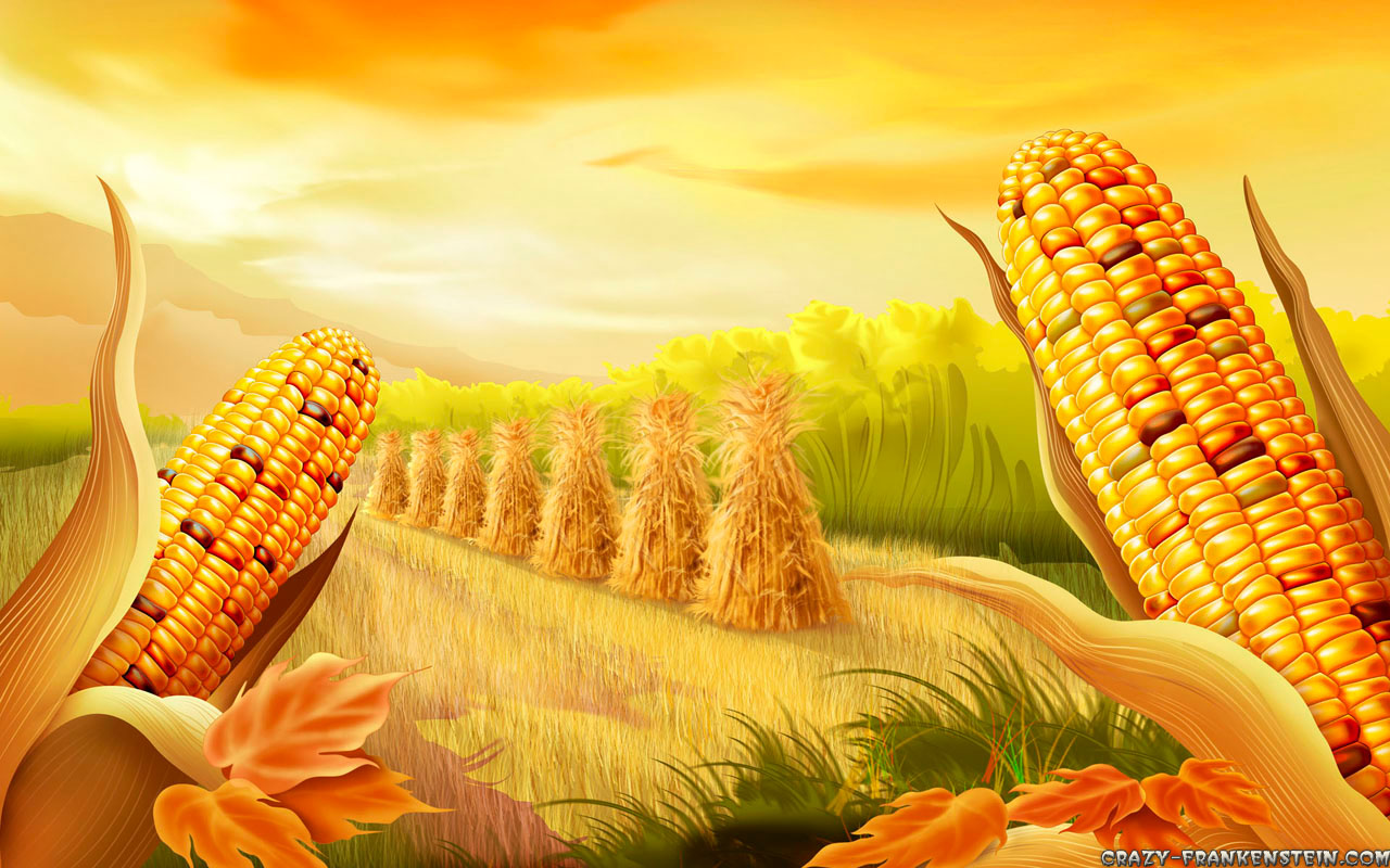 Maize Wallpaper: Free Thanksgiving PowerPoint Backgrounds Download
