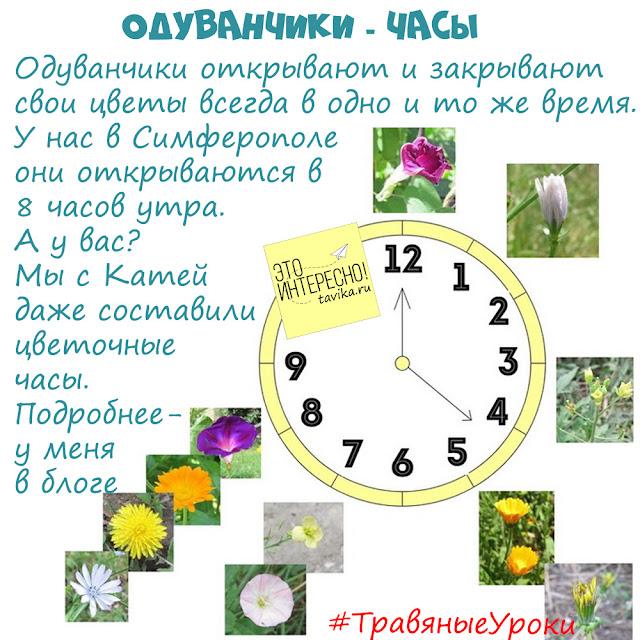 цветовные часы из одуванчика