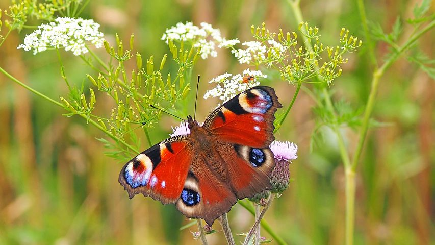 Amazing this most beautiful butterfly