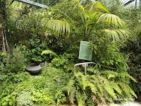Medicinal plants - Pukekura Park, New Plymouth, New Zealand