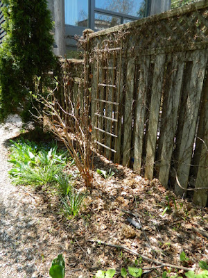 Toronto Gardening Company Riverdale Backyard Spring Garden Cleanup Before by Paul Jung Gardening Services