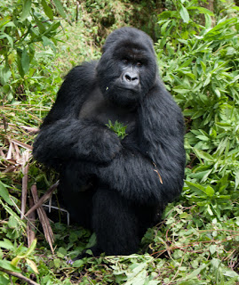 Tourism suspended in Virunga National Park in D.R. Congo.