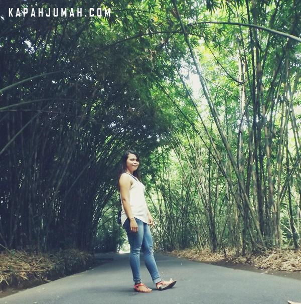 Hutan Bambu di Desa Penglipuran Bangli