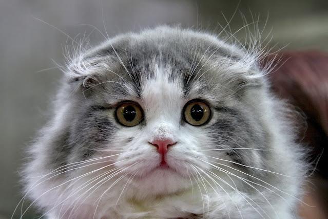 Cute Baby CatsCute Cats And KittensCute Funny AnimalsCute Baby AnimalsKittens CutestFunny CatsBaby KittyPet CatsBaby Pets Cats aesthetic Cute Baby CatsCute Little AnimalsCute Cats And KittensCute Funny AnimalsKittens CutestCute PetsOrange KittensRagdoll KittensFunny Animal Pictures Funny Animals. Cute Animals. Pretty Animals. I Love Cats. Crazy Cats. Cool Cats. Cat Aesthetic. Bad Memes. Dankest Memes. Funny Memes. Cute Cat Memes. Images for cats aesthetic cats aesthetic cats aesthetic cats aesthetic cats aesthetic cats aesthetic cats aesthetic cats aesthetic cats aesthetic yellow pink rainbow tumblr blue grunge purple grey brown soft fluffy orange warrior kawaii heart flower black korean art sad