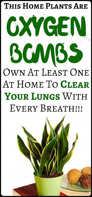 5 Plants to Clear Your Lungs With Every Breath
