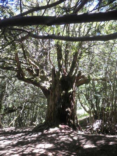 El Bosque del Tejedelo - Bosque Magico - Turismo Sanabria Zamora