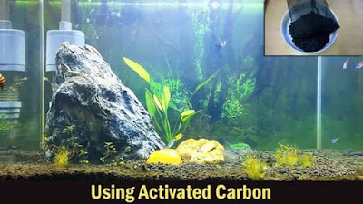 Karbon Aktif aquarium