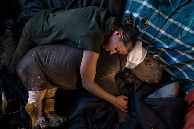 Bayi badak - korban kekejaman manusia pada hewan