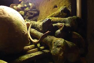Catacombes Paris ossements
