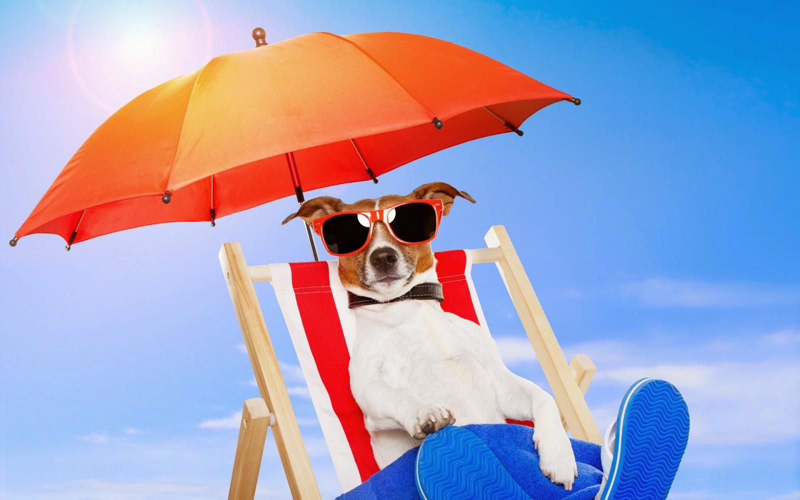 Hond geniet van de zon