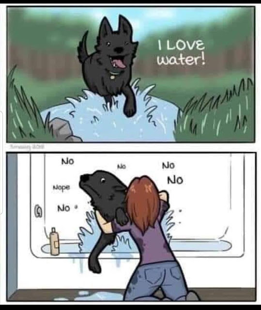 Funny Dog Water Logic Cartoon Picture