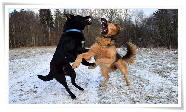 aggressive puppy training tips