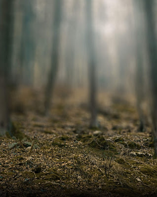 Foggy Effect Forest Blur Background Stock Image