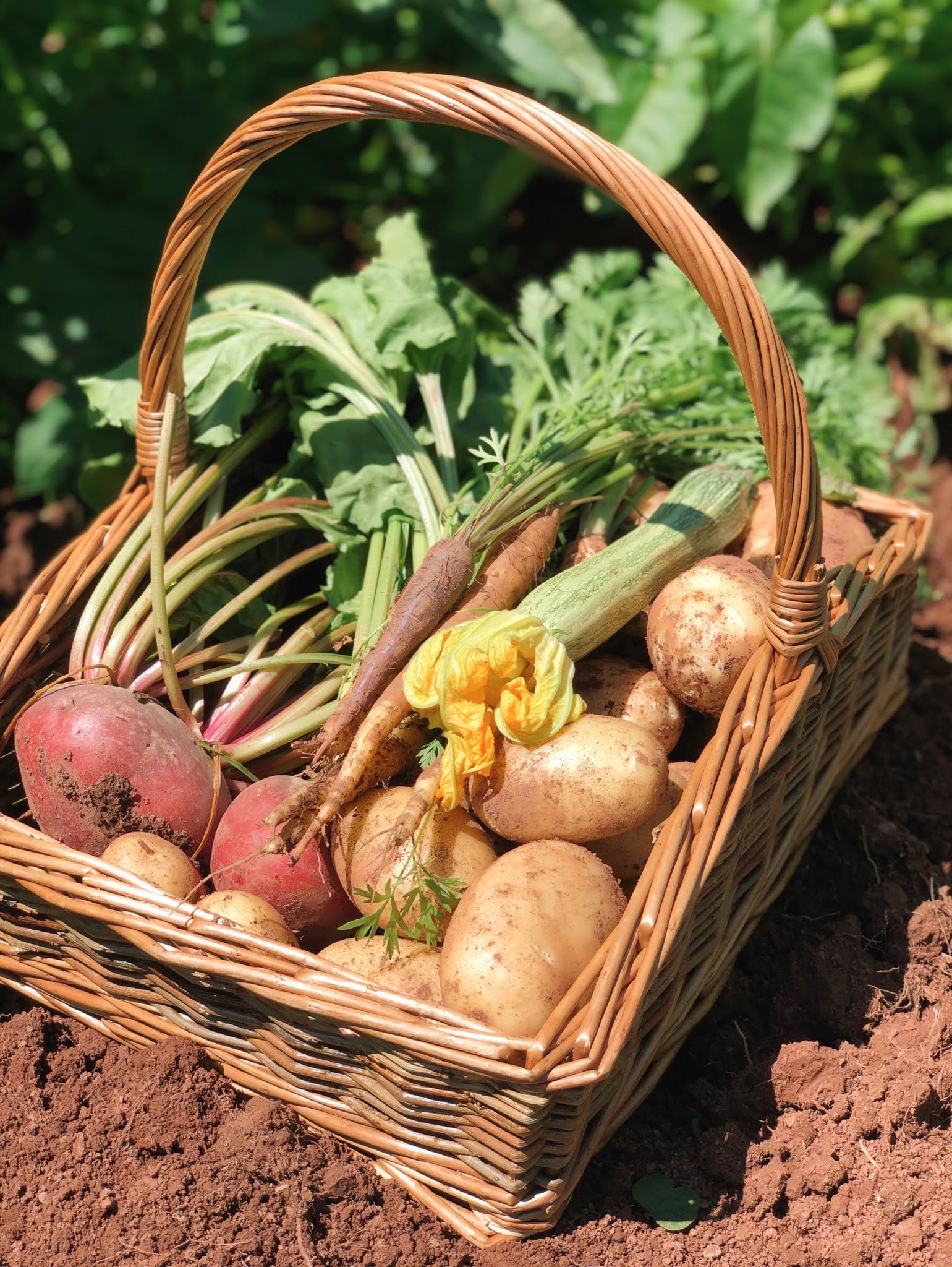 Vegetable-Harvest-Grow-Your-Own