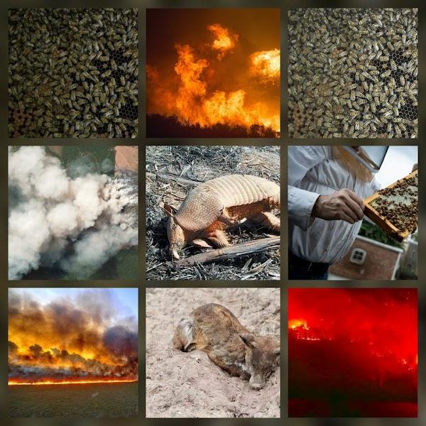 5 millones de abejas murieron y el amazonas esta ardiendo.