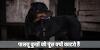 पालतू कुत्तों की पूंछ क्यों काट दी जाती है, क्या कोई साइंस है या बस देखा-देखी / GK IN HINDI