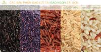 Các sản phẩm gạo lứt tím gạo lứt huyết rồng