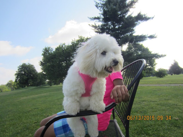 Chloe's puppy after she a got a hole-in-one. See more at 2golfgirlsdad.