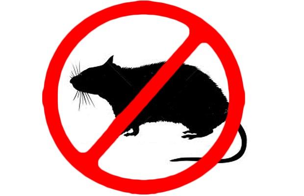 Desatascos Sevilla: servicio de control de plagas y desratización