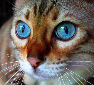 اجمل الخلفيات الحلوة للحيوانات، صور قطط كيوت خلفيات 3