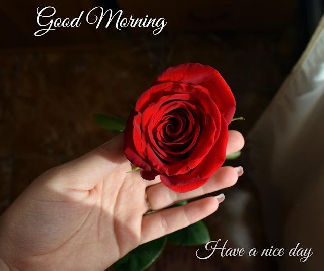 flowers pic with good morning