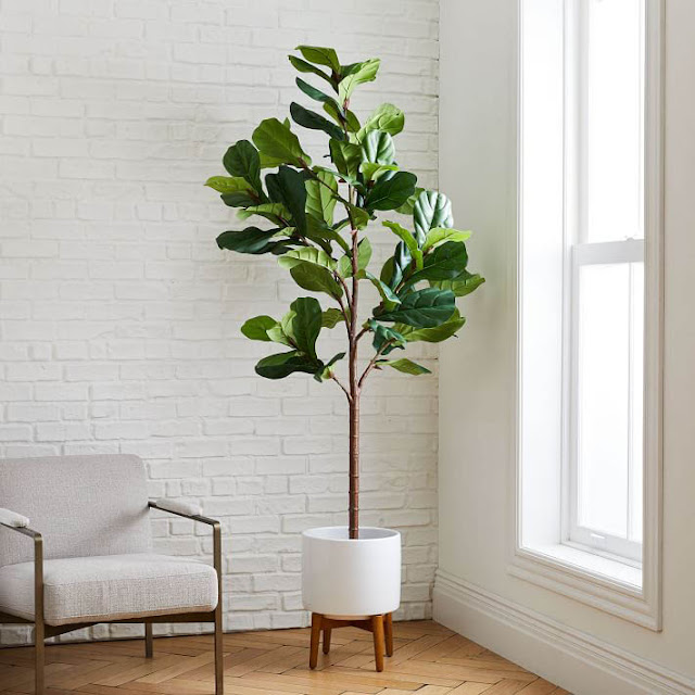 Easy Plants To Grow Inside