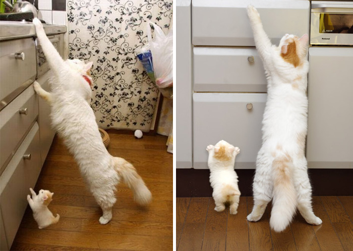 20 Lovely adult cats with their insanely cute little counterparts