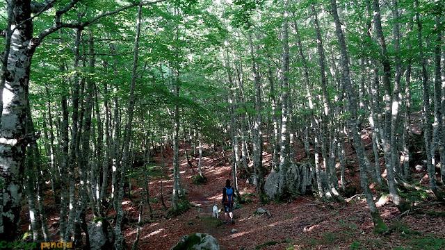 Sendero marcado en el bosque de subida a Castro Valnera