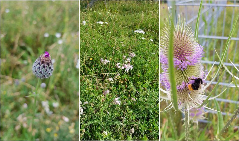 Bienenfreundliche Wiesenflächen